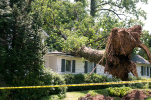 Ways to Protect Your Roof from Damage